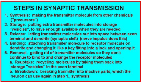 synaptic transmission flowchart synaptic transmission flowchart www imgkid the