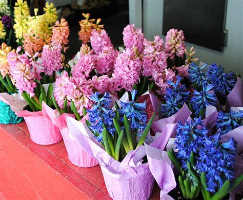 is an easter a perennial flowers plants 171 cronise market place