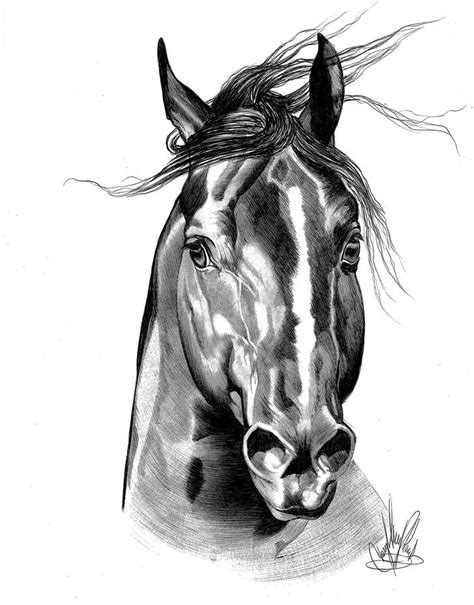 quarter horse tattoo quarter in bic pen by cheryl poland