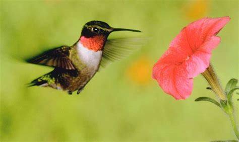 202 best garden to attract hummingbirds images on pinterest