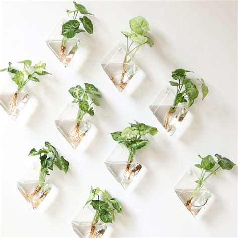 planters that hang on the wall aliexpress com buy 2pcs glass hanging wall vase flower