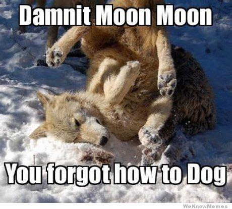 Moon Meme - best of the moon moon meme meme collection