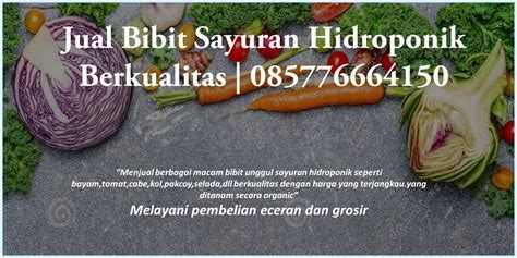 Jual Bibit Strawberry Hidroponik jual bibit buah hidroponik i 085776664150 jual bibit