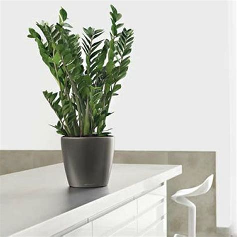 Living Decor Hire Plants Whangarei Hire Office Plants Living Decor Indoor Plant Hire Specialist