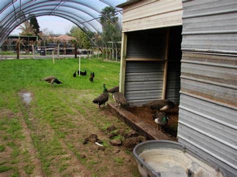 bertia lanhe design your own chicken coop