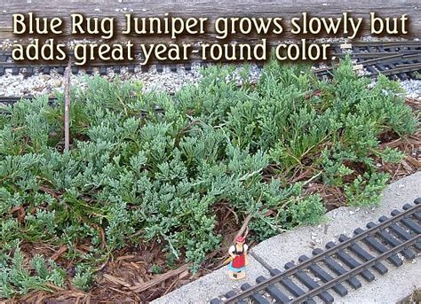 blue rug juniper spacing blue rug juniper spacing rugs ideas
