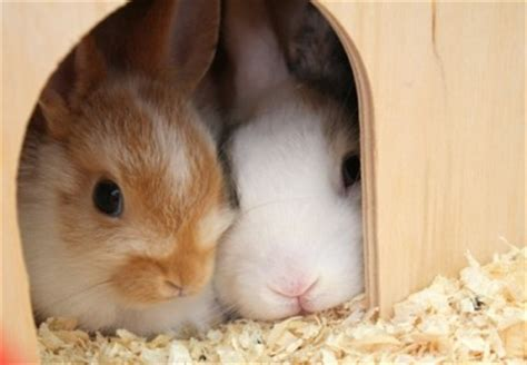 Dress Rabbit Kelinci bunny rabbit costume partyworld