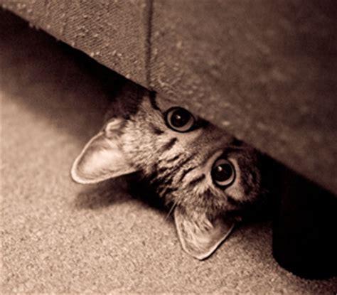 gatto a letto siamo tutti rifugiati di lobelia ondamica
