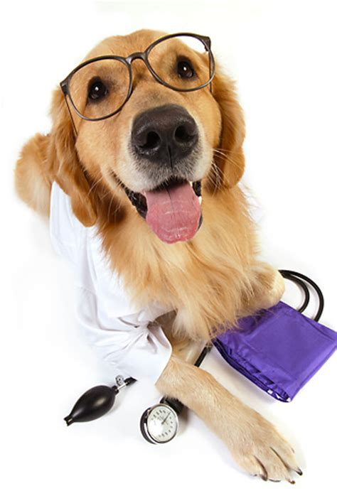 puppy doctor doctor animal stock photos kimballstock