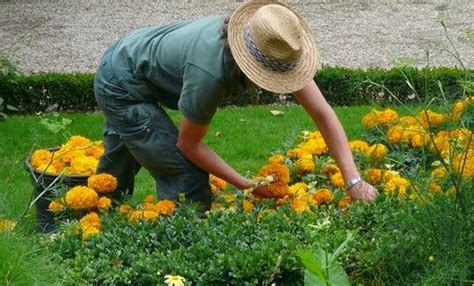 il giardiniere boom di startup da giardiniere un lavoro 232 una