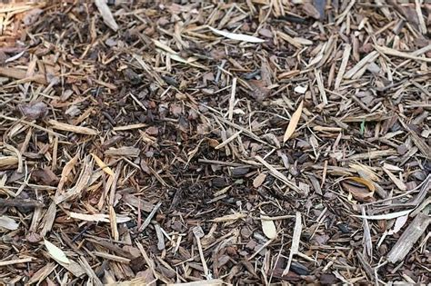 artillary hardwood floor remover mulch mold steps to clean up shotgun fungus jenn strathman