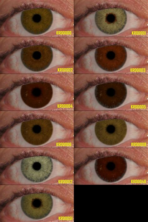 eye color calculator with grandparents eye color calculator with grandparents myideasbedroom