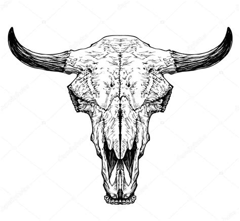 bull auroch skull with horns stock vector 169 diana