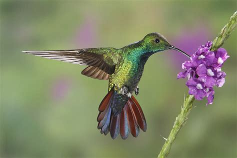 top flight nature photography hummingbirds and frogs of