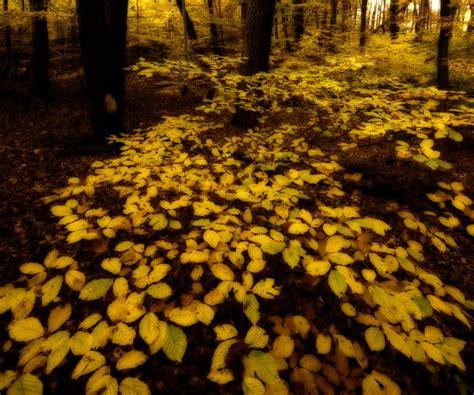 yellow things by mark seawell digital photographer