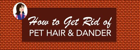 how to get rid of dog hair in house how to get rid of pet hair and dander maid brigade blog