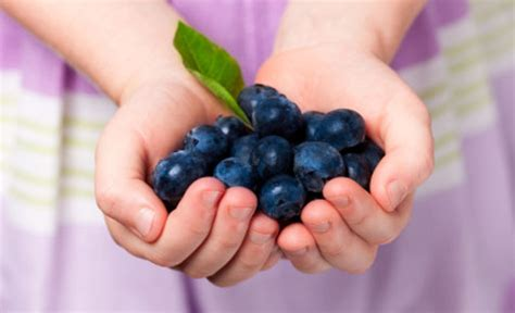 What Exactly Are Superfoods by Healthy Foods Superfoods 5 Top Superfoods With Amazing