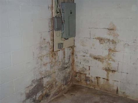 basement mold mold mildew in canton ohiogarrett basement waterproofing inc