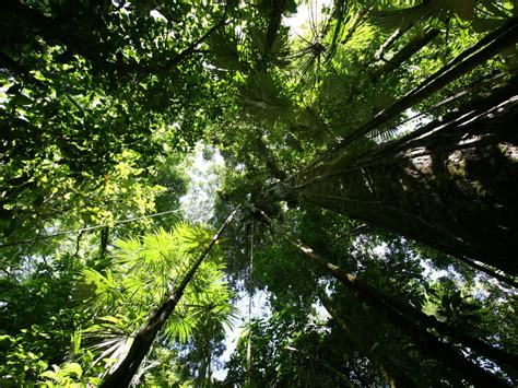 Canopy Definition Rainforest The Rainforest High Definition Desktop Wallpapers Hd