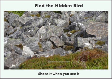 Find In The Picture Riddle Find The Bird In The Photo