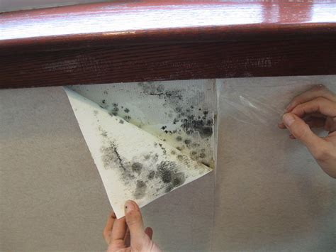 how to get mould off bathroom walls hotel mold mold inspection testing
