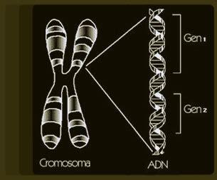 imágenes videos de 191 qu 233 son los genes