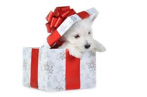 want to give a dog as a gift consider these other gifts
