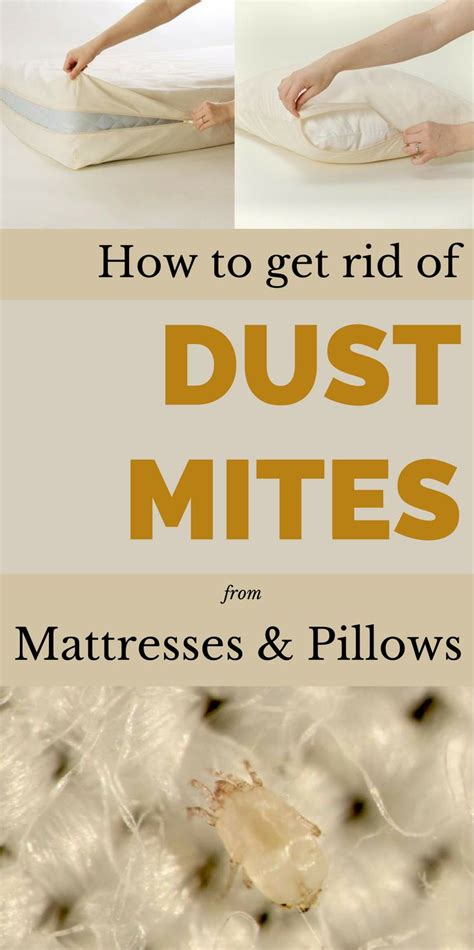 How To Get Your To With The Housework by 17 Best Images About Cleaning Mattresses On