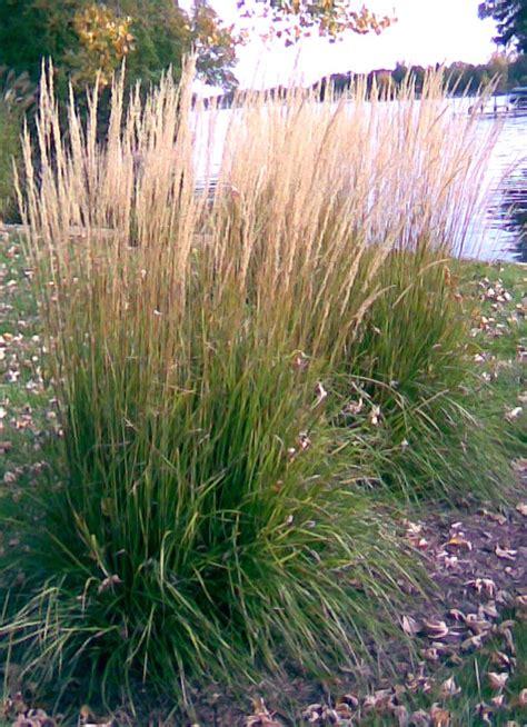 mark s top ornamental grasses