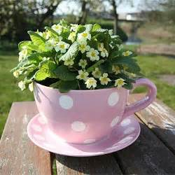 strawberry fool sell these gorgeous giant teacup planters on their teacup amp teapot
