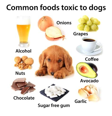 what to serve with dogs foods dogs should not eat 10 human foods that are dangerous to dogs top tips