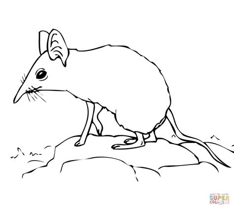 coloring page elephant head elephant head coloring pages