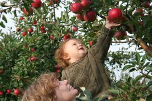 discover apple picking 9 pick your own orchards on long