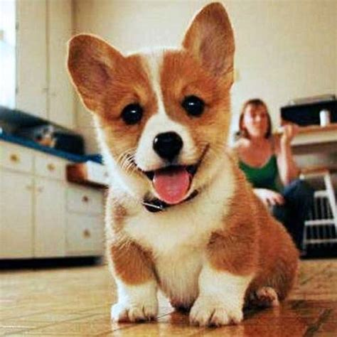 happy puppy happy dogs picture