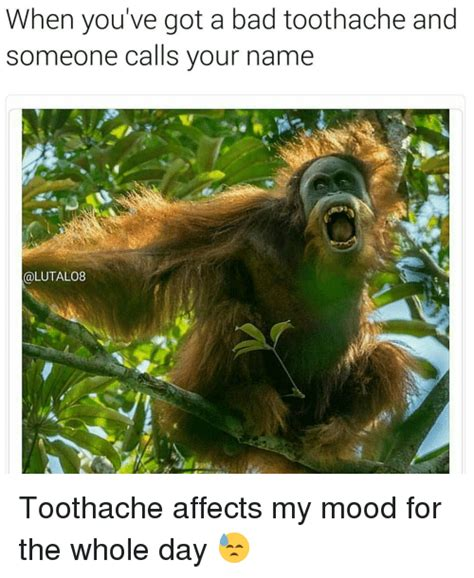 Toothache Meme - 25 best memes about whole day whole day memes