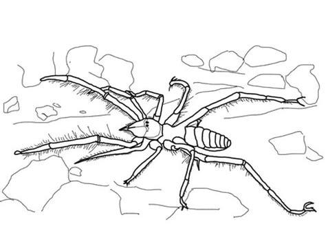 trapdoor spider coloring page trapdoor coloring pages