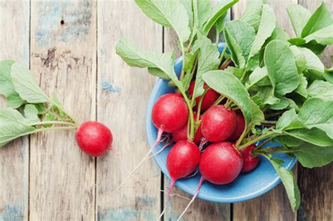 New And Innovative At And Radish by Radishes Facts Nutrition Health Benefits And How To Use
