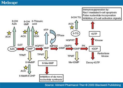 azathioprine dogs metabolism of azathioprine