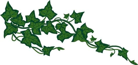 ivy vine clipart clipart collection vines flowers