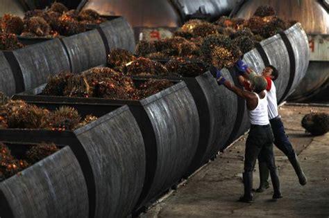 Pasar Minyak Kelapa indonesia kuasai pasar permintaan minyak sawit di pakistan