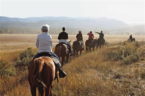 equine dissertation ideas horseback is a sport essay ideas