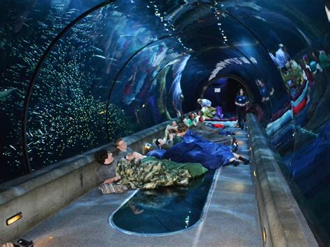 Aquarium Sweepstakes - best us aquariums travelchannel com travel channel