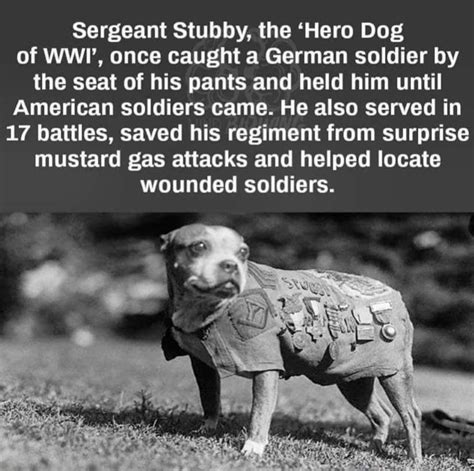 Sergeant Stubby In Ww1 90 From Tyranny The Story Of Sergeant Stubby The Of Wwi