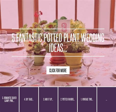 Hasnt Jake Bought His Own Undies Before by 5 Fantastic Potted Plant Wedding Ideas Wedding