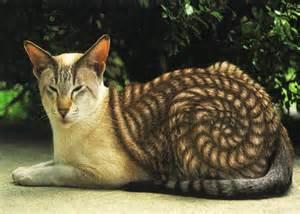 poor cat painted under the bowl 6 cat as leopard 5 Bestofcats