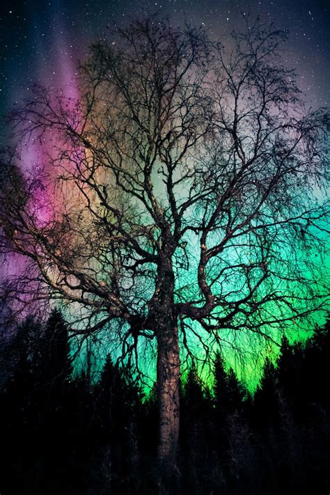 the northern lights tree best 20 northern lights wallpaper ideas on