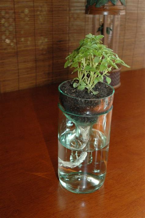 Recycled Wine Bottle Planter by Self Watering Planter Made From Recycled Wine Bottle