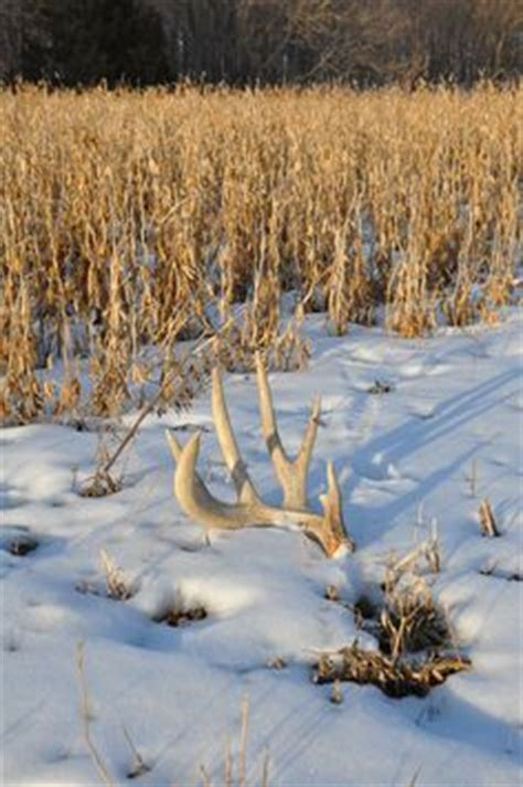 Looking For Deer Sheds by Shedrally The World S Largest Shed Hunt Is Back Click