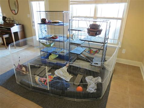 My Is A Cage Top 118 Ideas About Ferrets For Words On