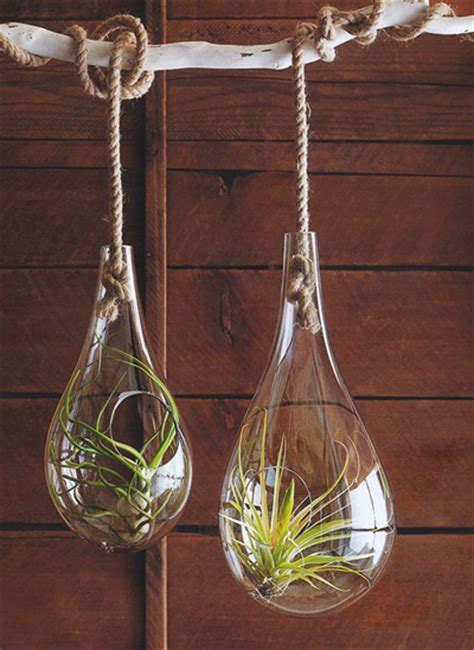 Mid Century Modern Air Hanging Planter for Tillandsia Air Plant: NOVA68.com